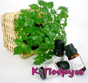 Зеленое растение и три флакона рядом
