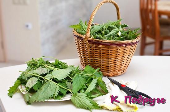 Зеленые листья крапивы и лукошко