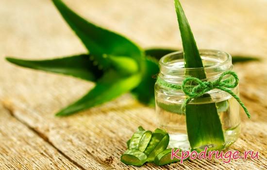 Баночка с зеленым листом растения